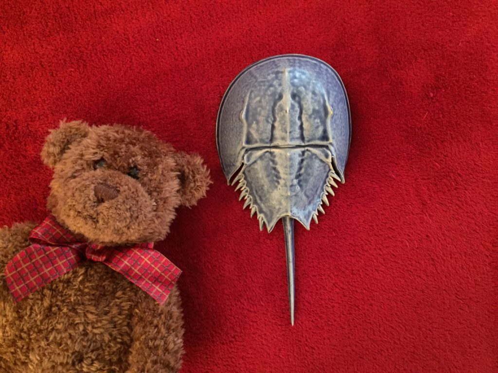 Horseshoe crab Ceramic Art Martha's Vineyard Teddy Bear Suite Raffle